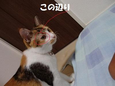 20130806_15.jpg
