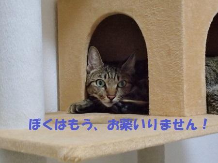 20130812_182.jpg