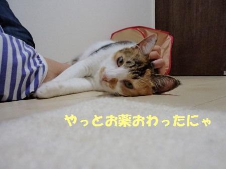 20130812_188.jpg