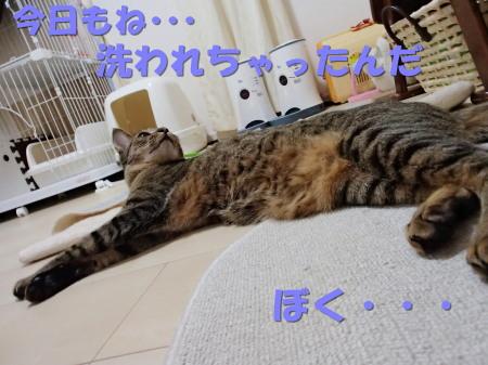 20130812_27.jpg