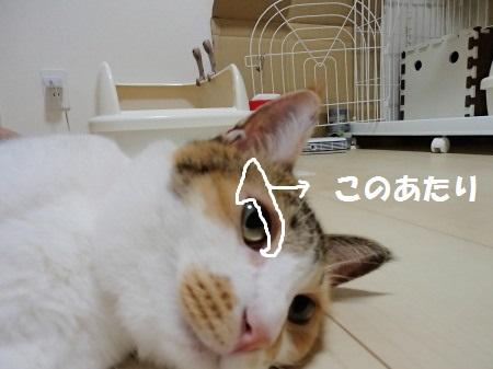 20130812_79.jpg