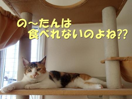 20130817_4.jpg