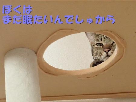 20130817_85.jpg