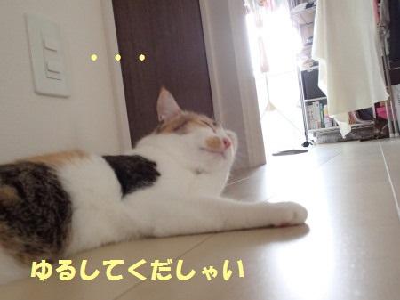 20130915_226.jpg