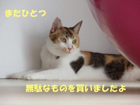 20130915_248.jpg