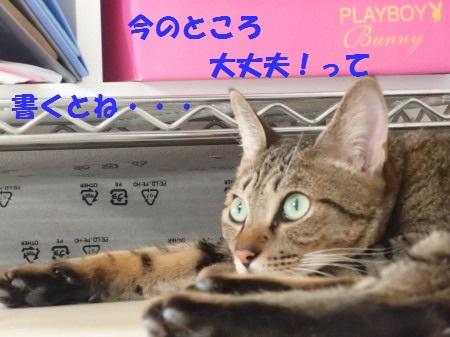 20130915_263.jpg
