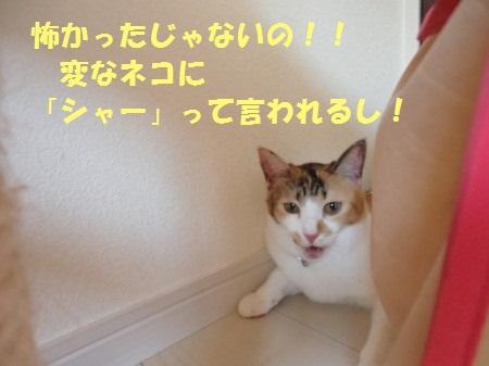 20130919_15.jpg