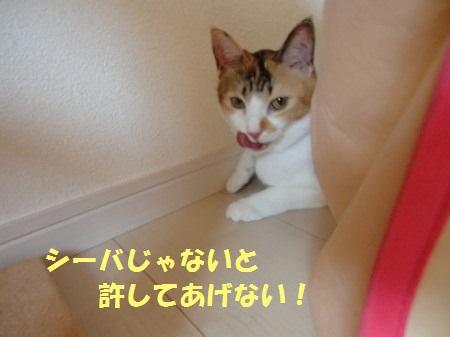 20130919_18.jpg