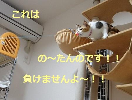 20131113_24.jpg