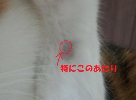 ML_FJ3100865.jpg