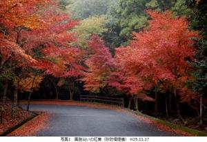 園路沿い紅葉
