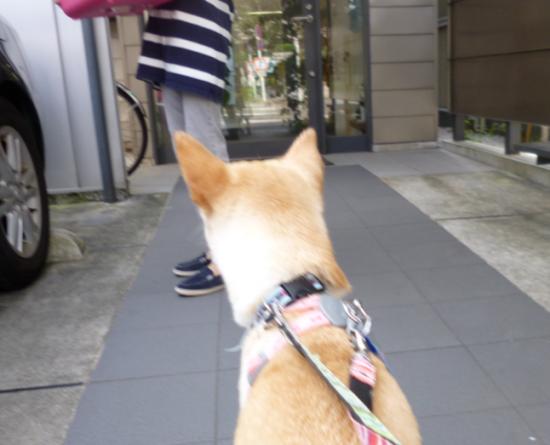 ぴぴ4_convert_20141011153815