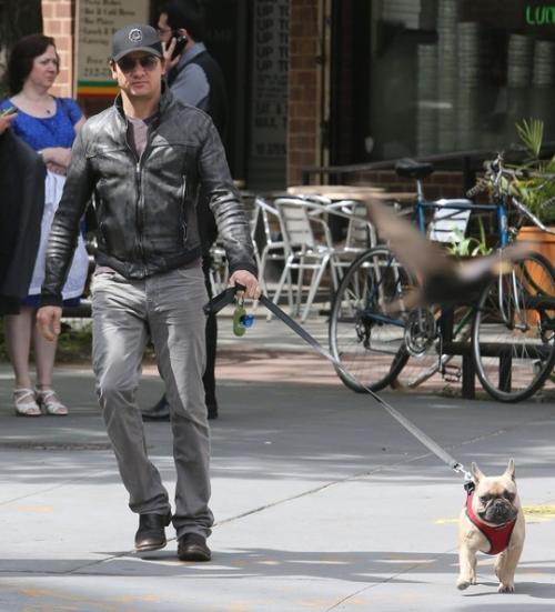 jeremy-renner-dog-02.jpg