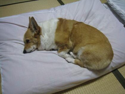 momo9846.jpg