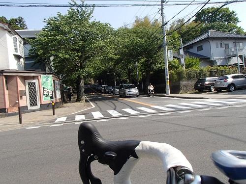 桜山 (7)