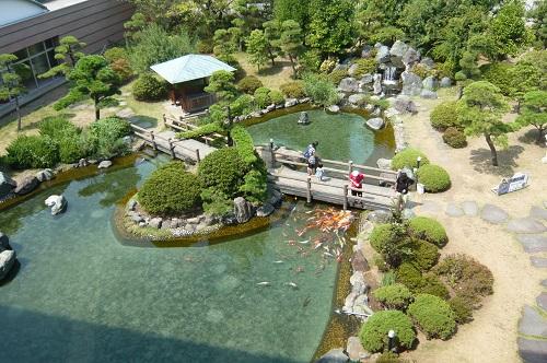 こい池 (1)