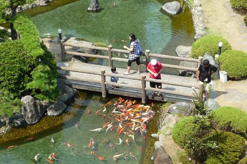 こい池 (3)