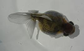 2012の魚