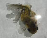 2012の魚1