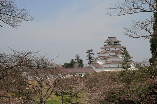 鶴ヶ城 桜 4 17 25