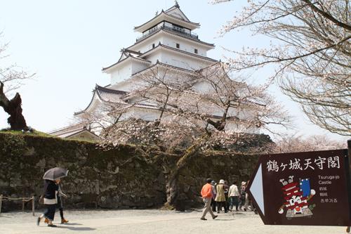 鶴ヶ城 桜 4 17 27