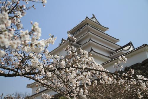 鶴ヶ城 桜 4 17 28