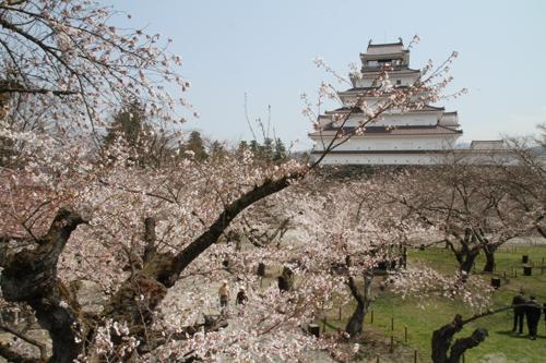 鶴ヶ城 桜 4 17 32