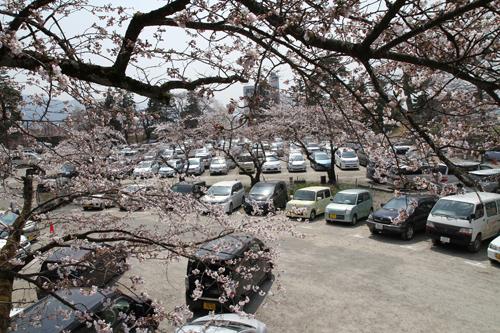 鶴ヶ城 桜 4 17 34