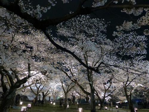 2013 04 19_hikari_4951