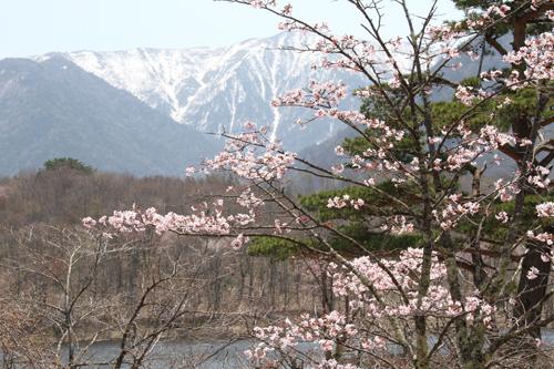 観音沼森林公園 0509 003