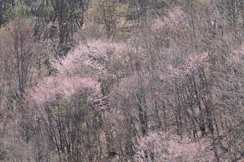 観音沼森林公園 0509 005