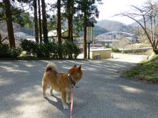 yunokamionsen49316.jpg
