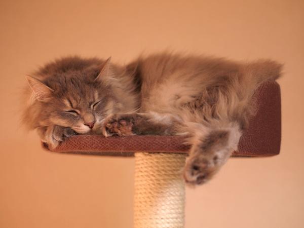日本猫には畳でしょ♪
