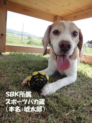 20130518_kota.jpg