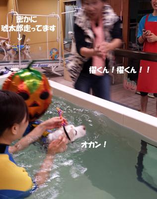 20131027_suisui3.jpg