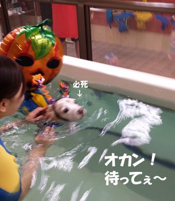 20131027_suisui4.jpg