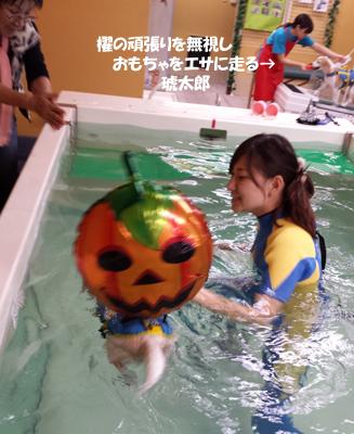 20131027_suisui5.jpg