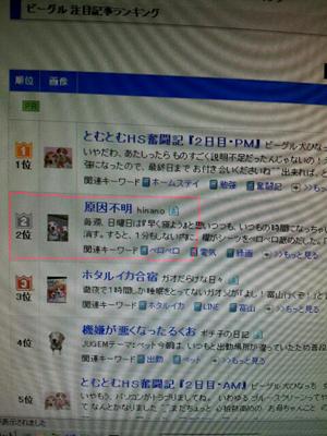 kiji_2.jpg
