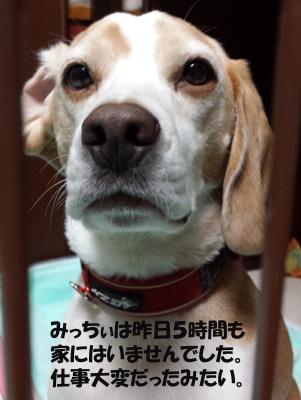 kotaro20130709_3.jpg