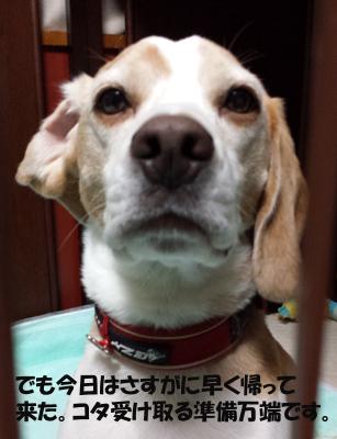 kotaro20130709_4.jpg