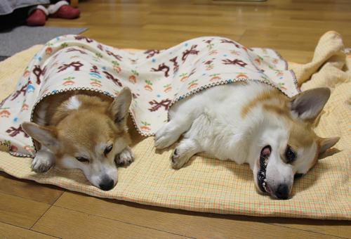 お昼寝ごっこ