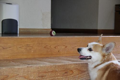 ボール見える