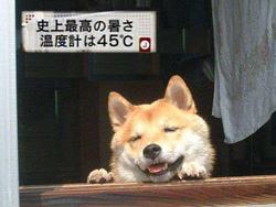 hot_dog_s.jpg