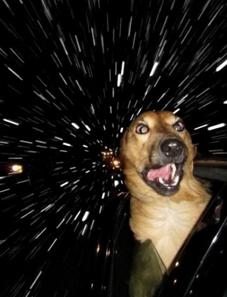 kousoku_dog_s.jpg