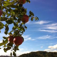 20131017CAAD10長野堤防102km中野りんご