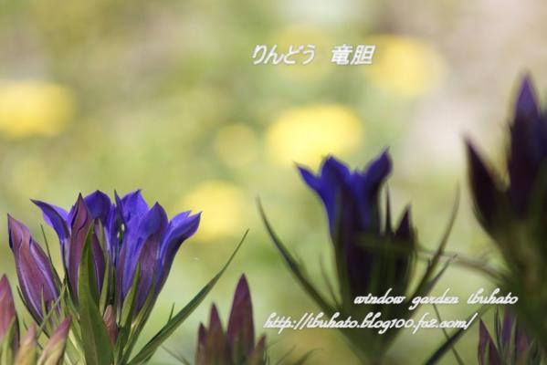 watermarked-DSC06441 - コピー