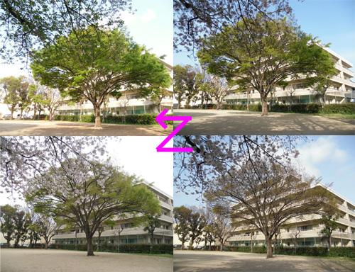 公園の木の移り変わり。
