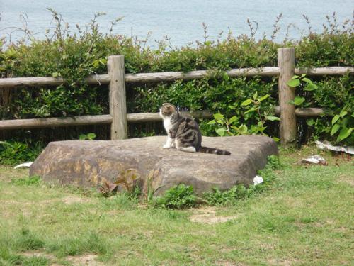 休憩所の猫2