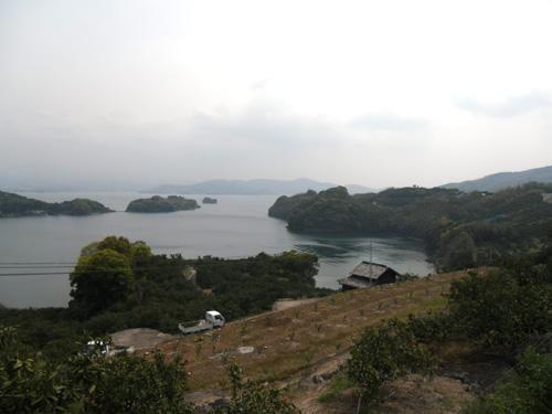 ミカン畑&大村湾