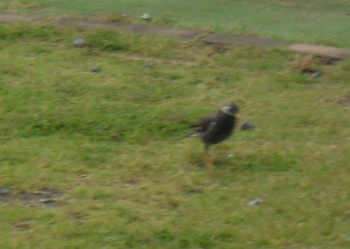 ん?この鳥どっかで見たことあるな。